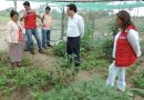 En Piura Midis – Qali Warma promueve huertos escolares en 20 escuelas públicas