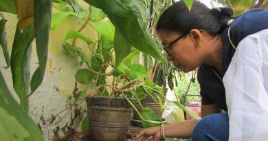 Diez distritos de la región Piura, No presentan casos de dengue desde hace tres semanas