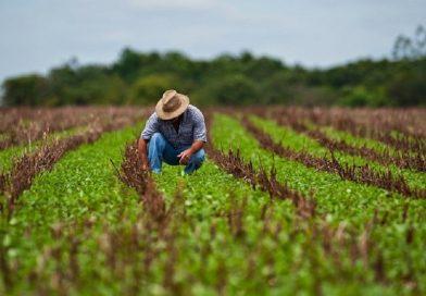 Perú aprovecha menos del 10% de los terrenos aptos para el agro