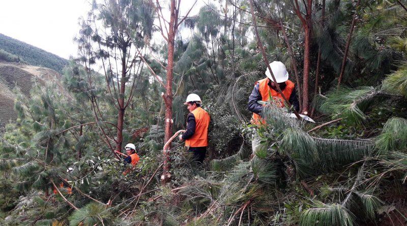 Comunidades campesinas de Piura aprenden silvicultura para mejorar su producción de pino